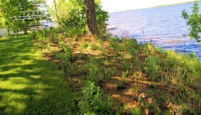 Big Lake Detroit Lakeshore Conservation Project